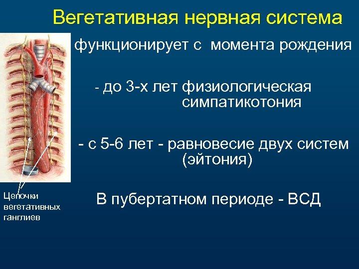 Вегетативная нервная система функционирует с момента рождения - до 3 -х лет физиологическая симпатикотония