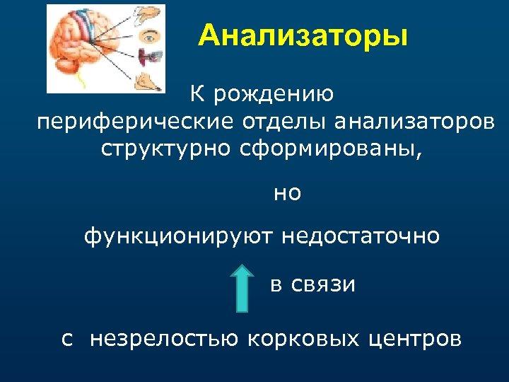 Анализаторы К рождению периферические отделы анализаторов структурно сформированы, но функционируют недостаточно в связи с