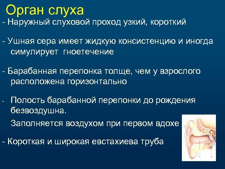 Орган слуха - Наружный слуховой проход узкий, короткий - Ушная сера имеет жидкую консистенцию