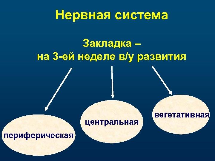 Нервная система Закладка – на 3 -ей неделе в/у развития центральная периферическая вегетативная