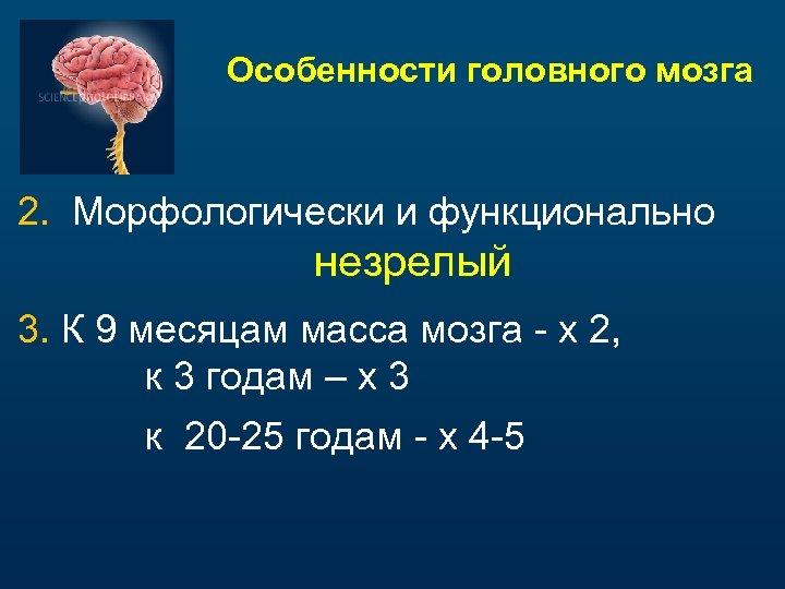 Особенности головного мозга 2. Морфологически и функционально незрелый 3. К 9 месяцам масса мозга
