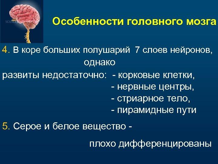 Особенности головного мозга 4. В коре больших полушарий 7 слоев нейронов, однако развиты недостаточно:
