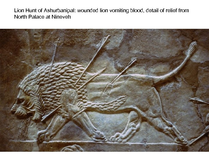 Lion Hunt of Ashurbanipal: wounded lion vomiting blood, detail of relief from North Palace