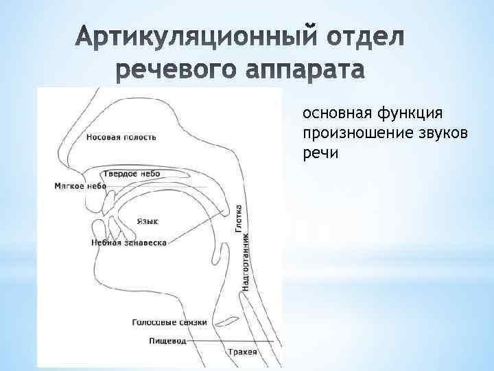основная функция произношение звуков речи