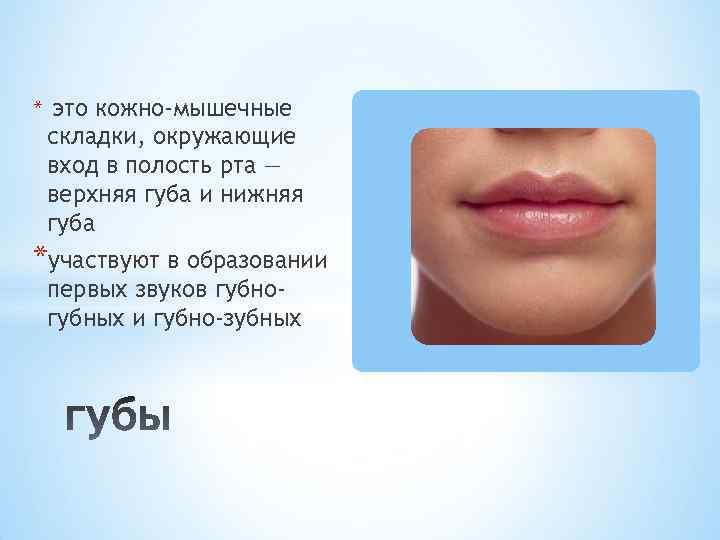 * это кожно-мышечные складки, окружающие вход в полость рта — верхняя губа и нижняя