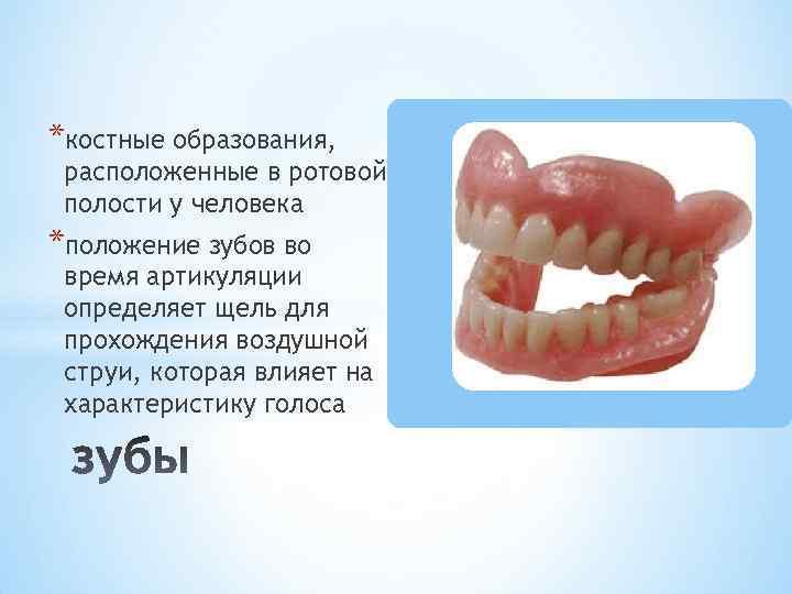 *костные образования, расположенные в ротовой полости у человека *положение зубов во время артикуляции определяет