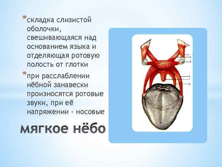 *складка слизистой оболочки, свешивающаяся над основанием языка и отделяющая ротовую полость от глотки *при