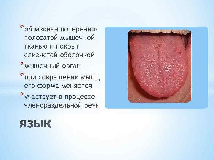 *образован поперечнополосатой мышечной тканью и покрыт слизистой оболочкой *мышечный орган *при сокращении мышц его