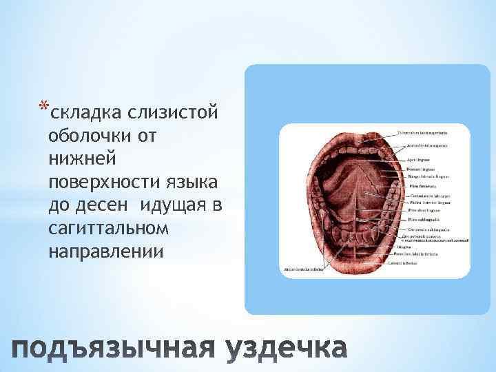 *складка слизистой оболочки от нижней поверхности языка до десен идущая в сагиттальном направлении