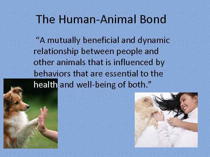 relationship between humans and animals essay Relationship between human beings and nature it is a big violation if they hurt nature or animals relationship between humans and nature.