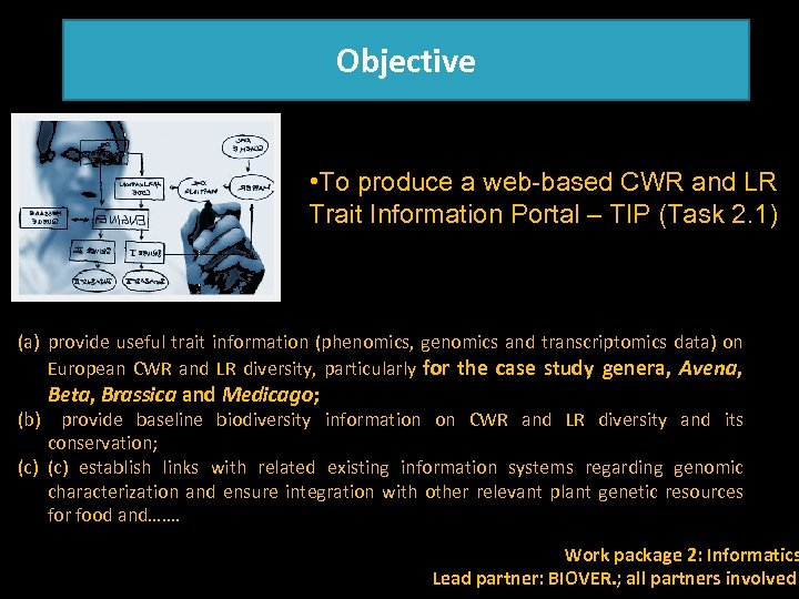 Objective • To produce a web-based CWR and LR Trait Information Portal – TIP