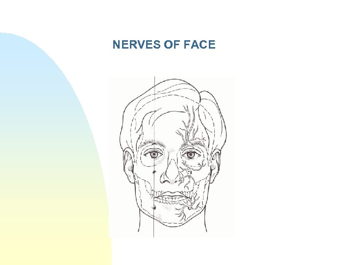 NERVES OF FACE