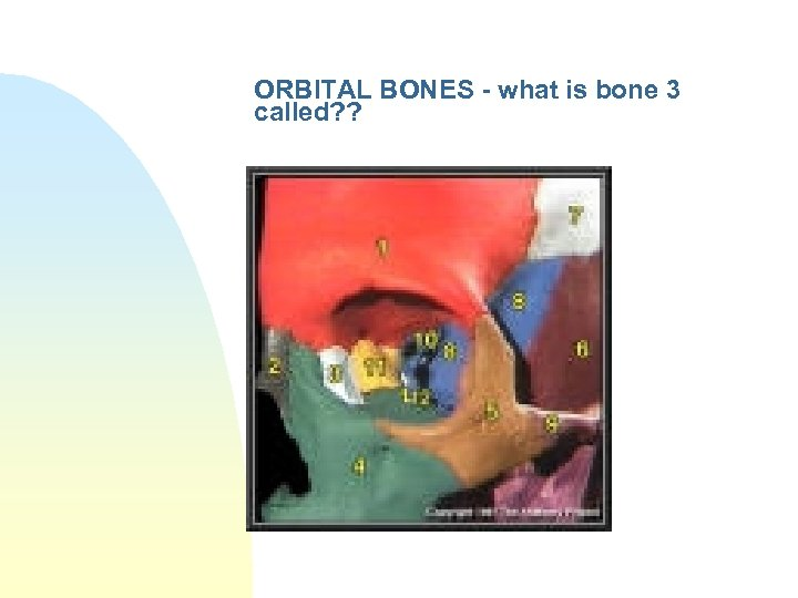 ORBITAL BONES - what is bone 3 called? ?