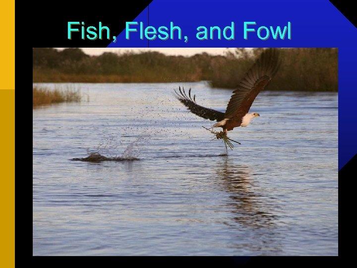 Fish, Flesh, and Fowl