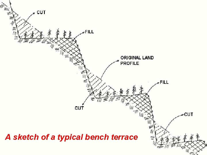 . A sketch of a typical bench terrace