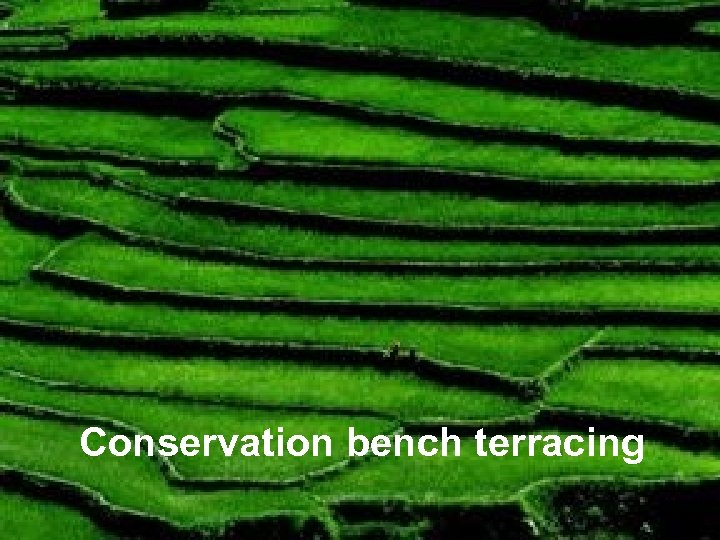 Conservation bench terracing