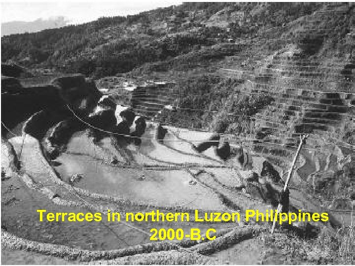Terraces in northern Luzon Philippines 2000 -B. C
