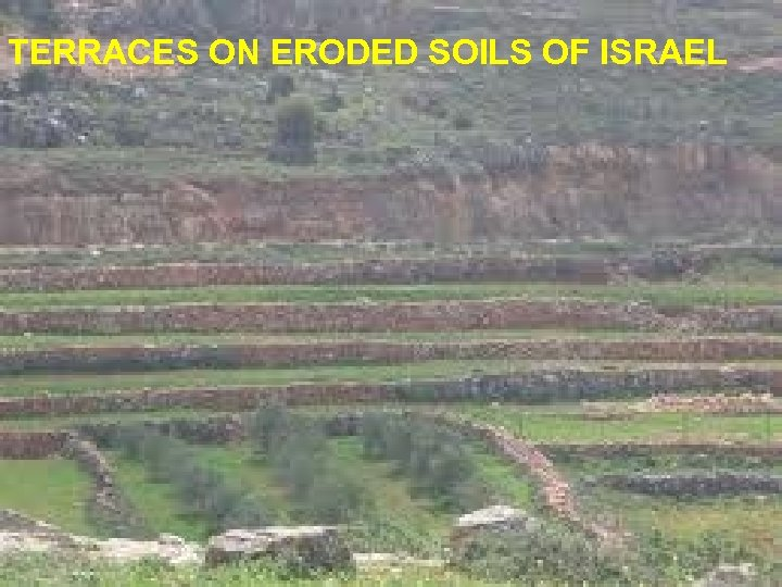 TERRACES ON ERODED SOILS OF ISRAEL