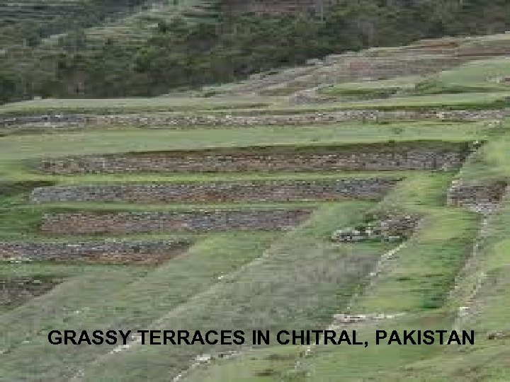 GRASSY TERRACES IN CHITRAL, PAKISTAN