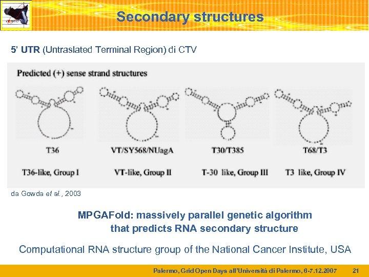 Secondary structures 5' UTR (Untraslated Terminal Region) di CTV da Gowda et al. ,