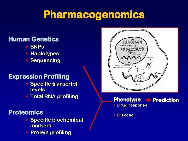 Pharmacogenomics Human Genetics • SNPs • Haplotypes • Sequencing Expression Profiling • Specific transcript
