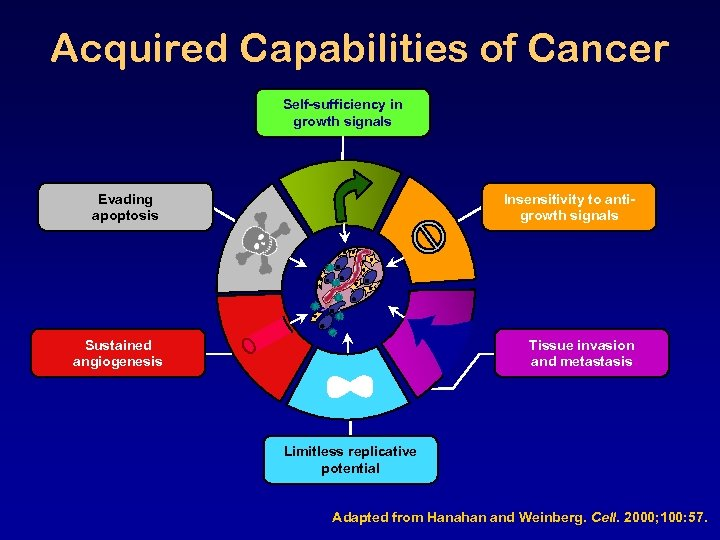 Acquired Capabilities of Cancer Self-sufficiency in growth signals Evading apoptosis Insensitivity to antigrowth signals