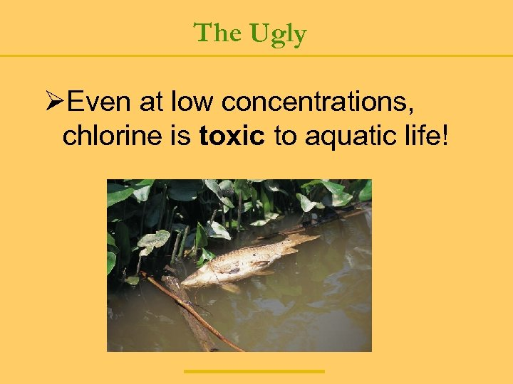 The Ugly ØEven at low concentrations, chlorine is toxic to aquatic life!