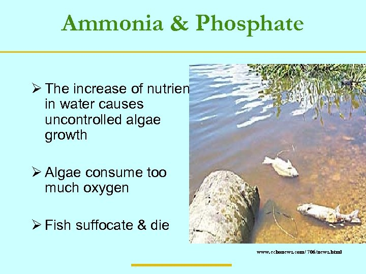 Ammonia & Phosphate Ø The increase of nutrients in water causes uncontrolled algae growth