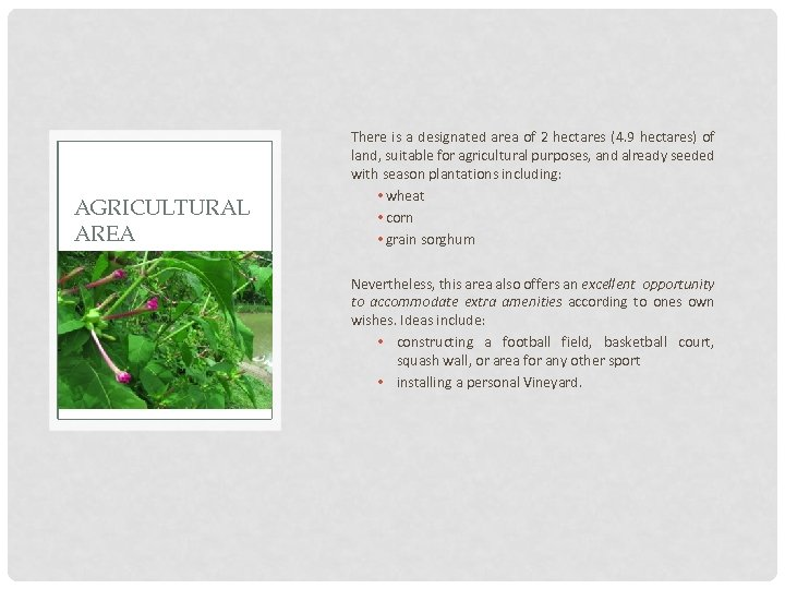 AGRICULTURAL AREA There is a designated area of 2 hectares (4. 9 hectares) of