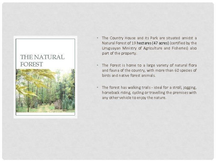 THE NATURAL FOREST • The Country House and its Park are situated amidst a