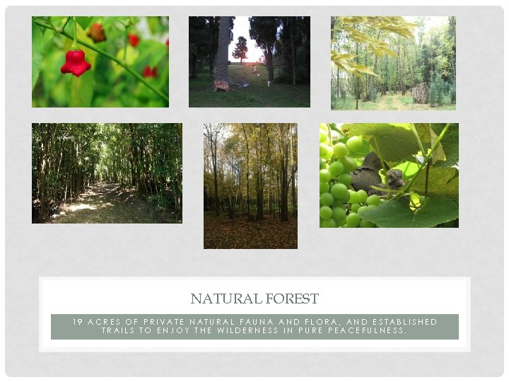NATURAL FOREST 19 ACRES OF PRIVATE NATURAL FAUNA AND FLORA, AND ESTABLISHED TRAILS TO