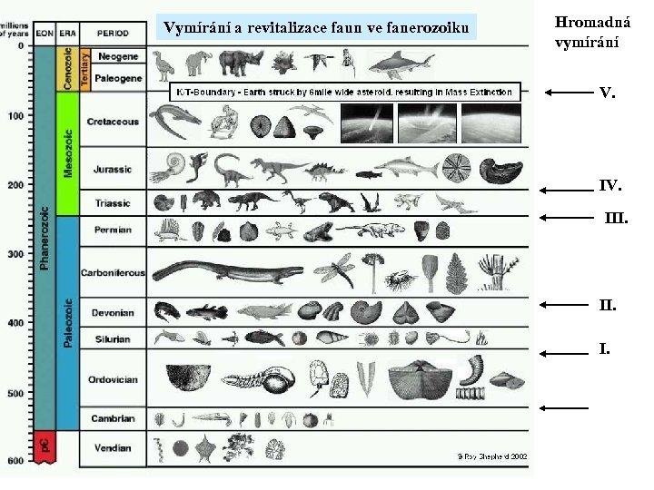Vymírání a revitalizace faun ve fanerozoiku Hromadná vymírání V. IV. III. I.