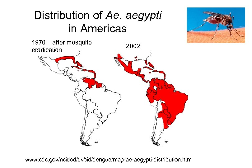 Distribution of Ae. aegypti in Americas 1970 – after mosquito eradication 2002 www. cdc.