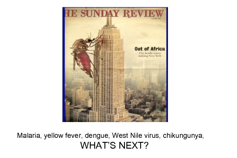 Malaria, yellow fever, dengue, West Nile virus, chikungunya, WHAT'S NEXT?