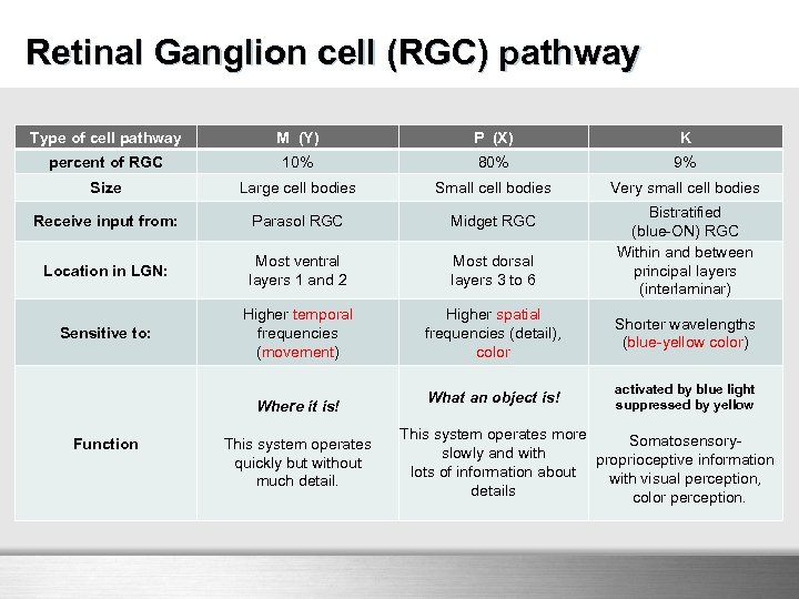Retinal Ganglion cell (RGC) pathway Type of cell pathway M (Y) P (X) K