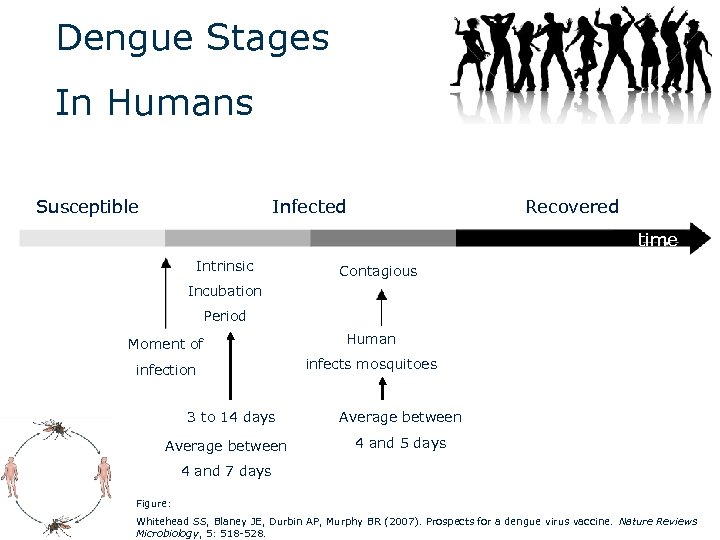Dengue Stages In Humans Susceptible Infected Recovered time Intrinsic Contagious Incubation Period Moment of