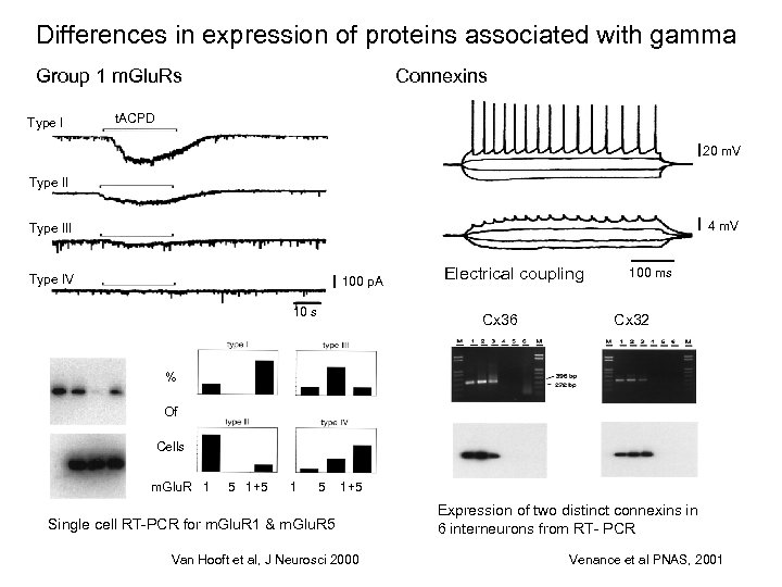 Differences in expression of proteins associated with gamma Group 1 m. Glu. Rs Type