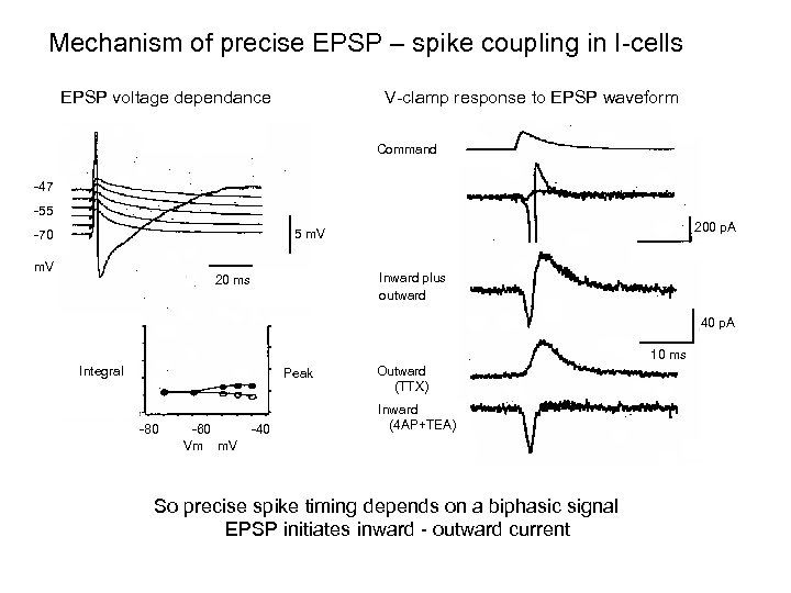 Mechanism of precise EPSP – spike coupling in I-cells V-clamp response to EPSP waveform