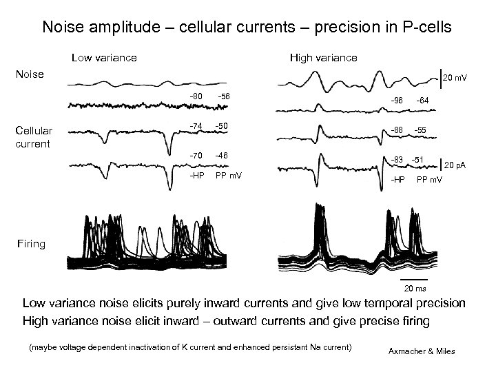 Noise amplitude – cellular currents – precision in P-cells Low variance High variance Noise