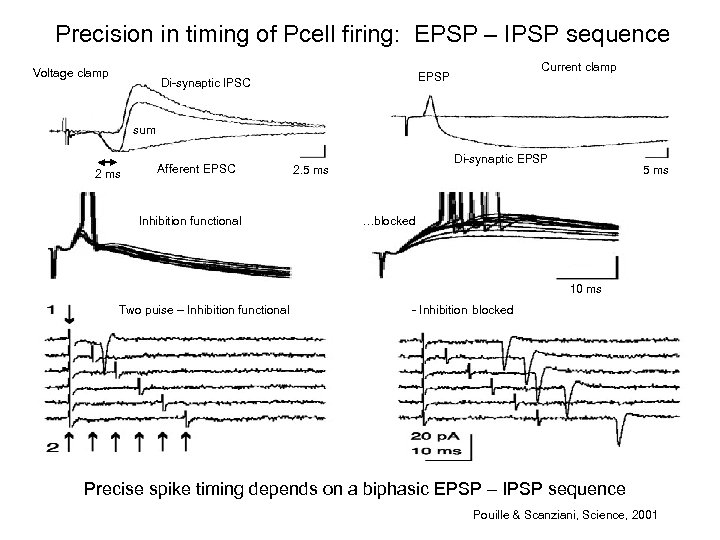 Precision in timing of Pcell firing: EPSP – IPSP sequence Voltage clamp Current clamp