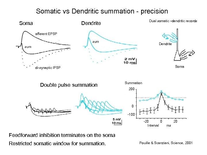 Somatic vs Dendritic summation - precision Soma Dual somatic –dendritic records Dendrite afferent EPSP