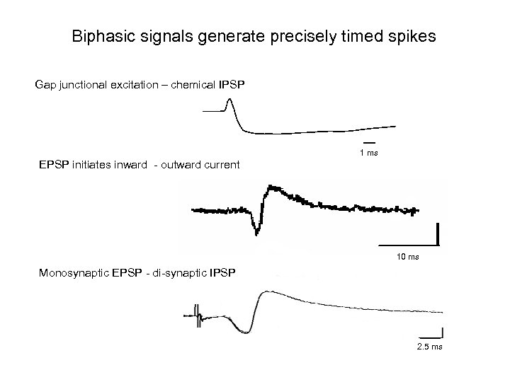 Biphasic signals generate precisely timed spikes Gap junctional excitation – chemical IPSP 1 ms