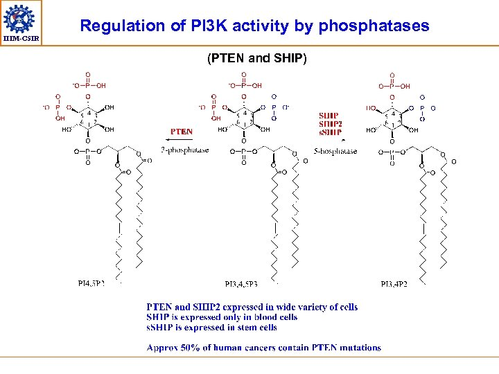 IIIM-CSIR Regulation of PI 3 K activity by phosphatases (PTEN and SHIP)