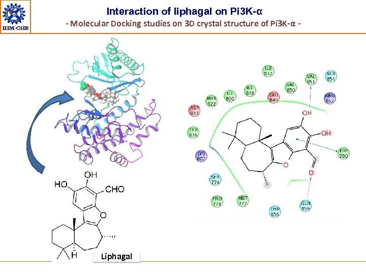 Interaction of liphagal on Pi 3 K-α IIIM-CSIR - Molecular Docking studies on 3