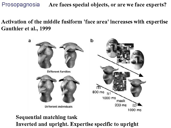 Prosopagnosia Are faces special objects, or are we face experts? Activation of the middle