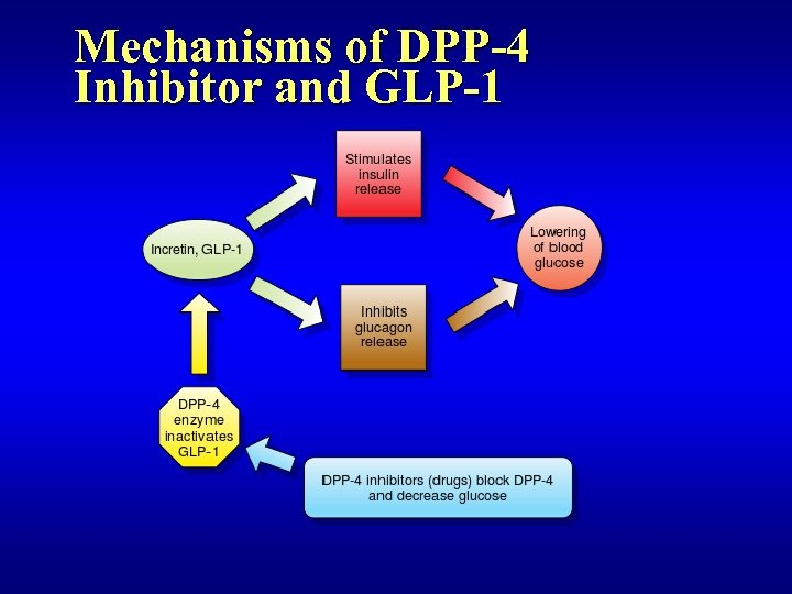 Mechanisms of DPP-4 Inhibitor and GLP-1