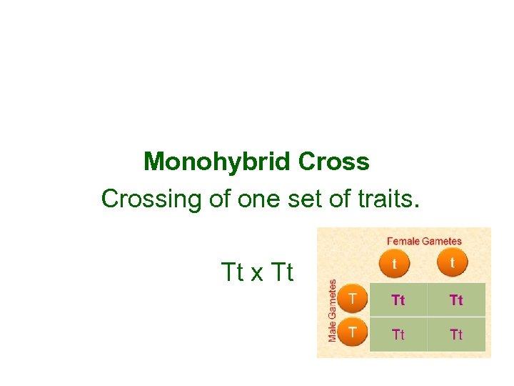 Monohybrid Crossing of one set of traits. Tt x Tt