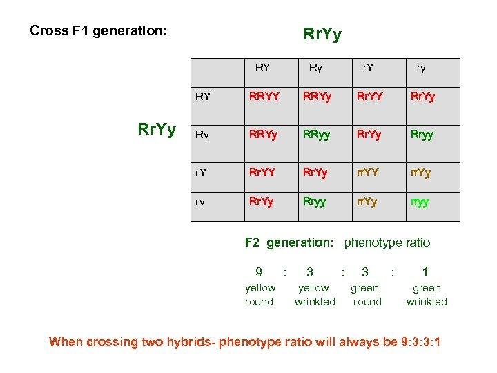 Cross F 1 generation: Rr. Yy RY r. Y ry RY RRYy Rr. YY