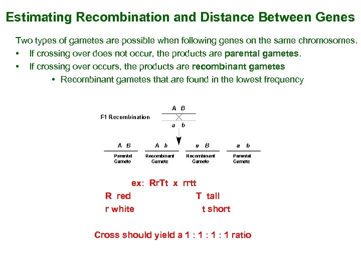 Estimating Recombination and Distance Between Genes Two types of gametes are possible when following