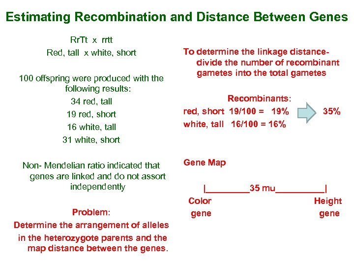 Estimating Recombination and Distance Between Genes Rr. Tt x rrtt Red, tall x white,